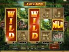 Read more about the article Die Wild Symbole bei Slotgames
